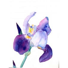 """Iris"" watercolor"